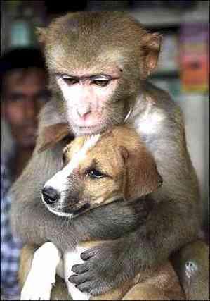 monkey_dog_22