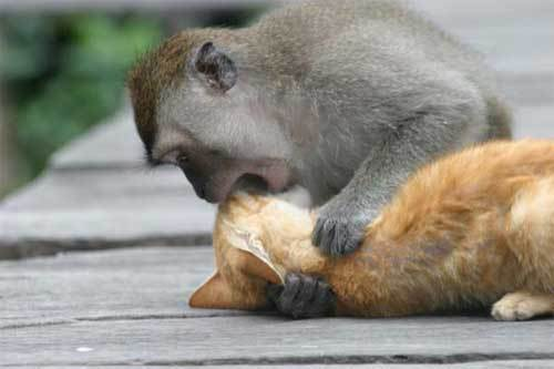 monkey_n_cat