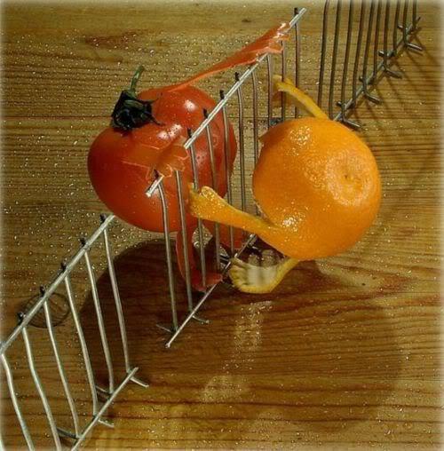 tomat dan jeruk