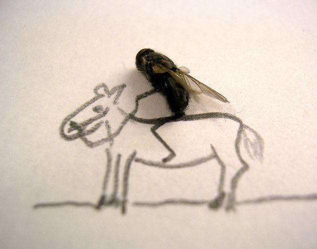 ini baru terjadi disni: lalat naik kuda