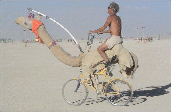 sepeda gurun